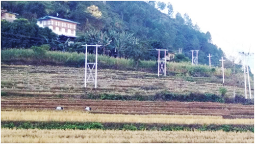 Crane roosting in Buna Paddy field, Picture courtesy yeshey Dorji, Ranjung Range office.