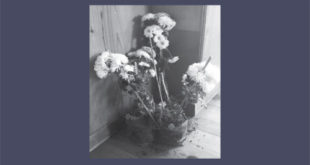 The three flowers that were stolen