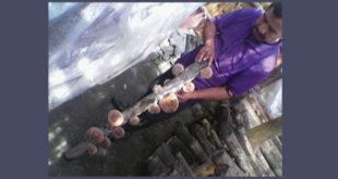 mushroom123