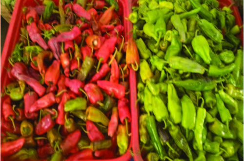 b715fd439 Prices of smaller and spicier domestic chilli go up and up after import ban
